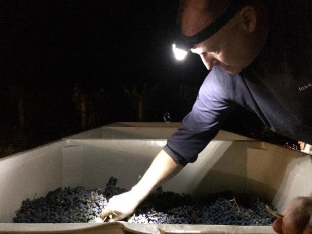 Tom during harvest